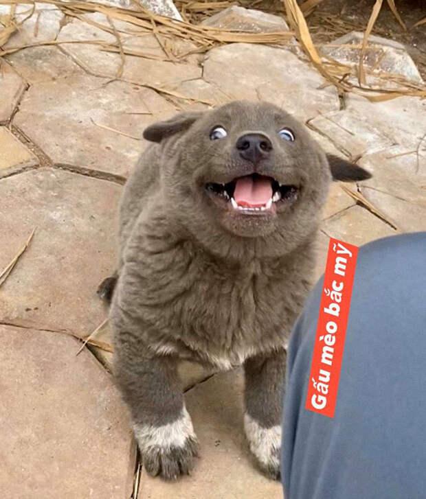 6 фото щенка, который похож на гибрид кота и собаки
