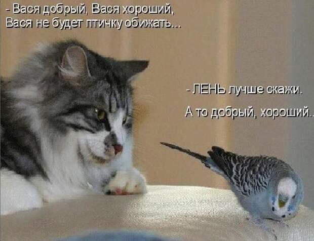 Котоматрица. Мысли вслух : )