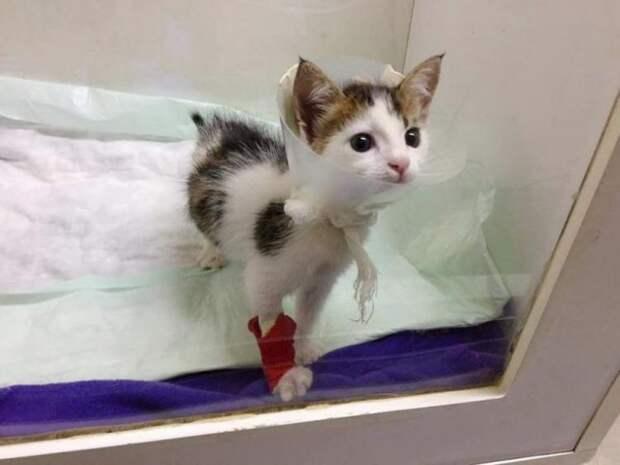 Спасенный из мусорного бака котенок, оказался уникальным маленьким сокровищем