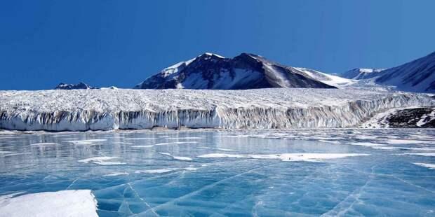 В Антарктиде нашли богатую жизнь