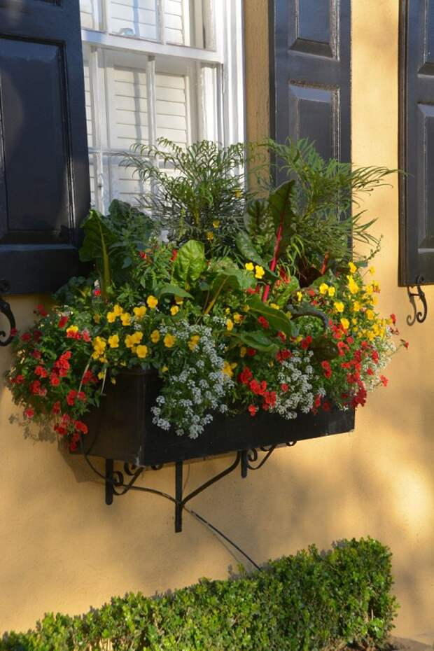 Цветы в горшках, вазонах и контейнерах.