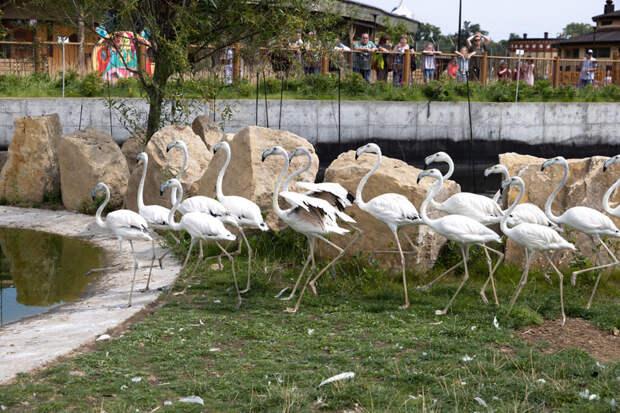 Казанскую «Реку Замбези» заселили фламинго