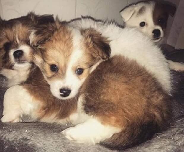 Грустные щенки
