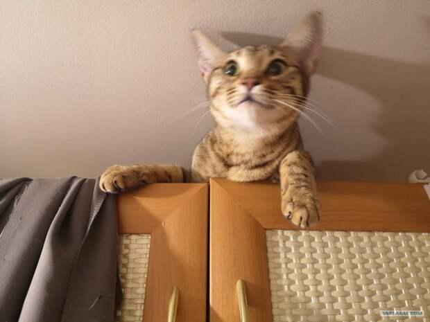 Шкодный кот (весёлая фотоподборка)