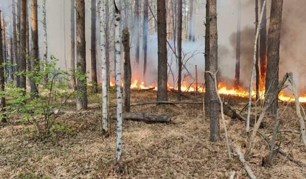 Из-за сильного ветра лесной пожар может угрожать деревне вТюменской области