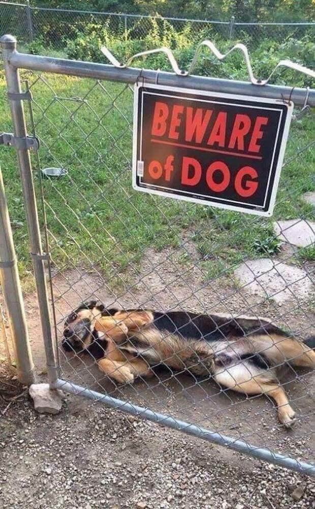 Самые злые и ужасные собачки на охране