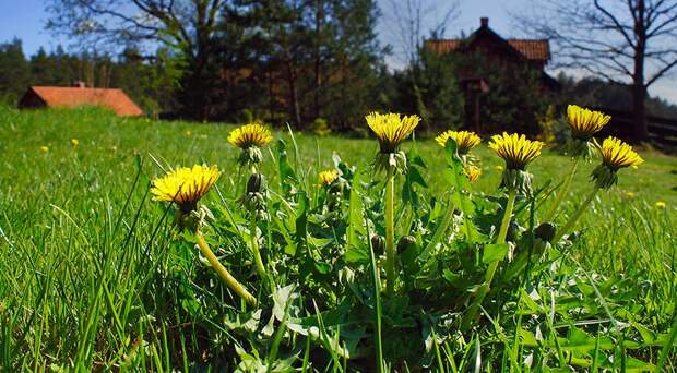 Природа подскажет, когда что сажать: 4 главных природных маркера, за которыми следят все дачники