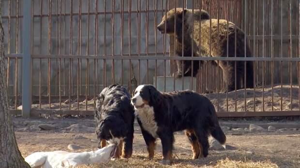 Медведица из зоопарка Ленобласти подружилась с другими животными