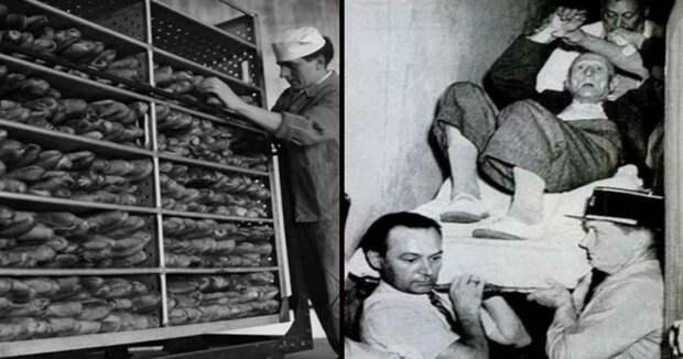 Нераскрытая тайна проклятого хлеба: кто виноват — ЦРУ, Сталин или спорынья?