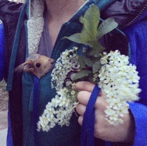«Каждую весну у неё немного портится характер…» Как девушка приручила белочку-потеряшку!