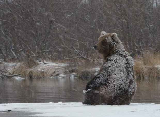 Медведи на Камчатке. Часть 2