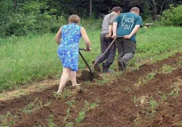 Копать или не копать землю на даче - из опыта огородника