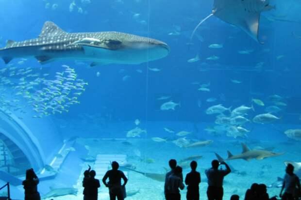 Акулы, кит и дельфины в собственном доме никого не оставят равнодушными (Xanadu 2.0). | Фото: zen.yandex.ru.