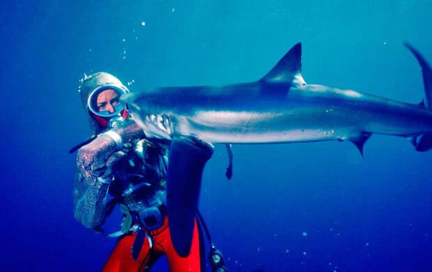 """""""Игры с акулами"""": история жизни, посвященная рыбам и океану"""