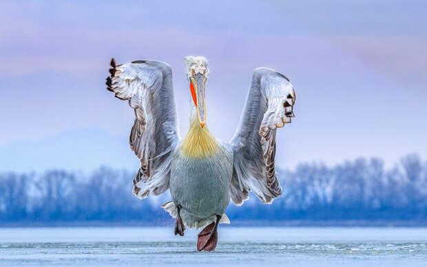 32 невероятные фотографии птиц, которые приводят в восторг