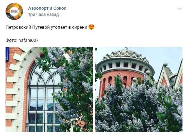 Фото дня: в Петровском парке расцвела сирень