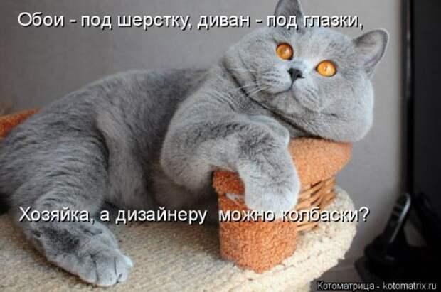 Свежая котоматрица для всех (37 фото)