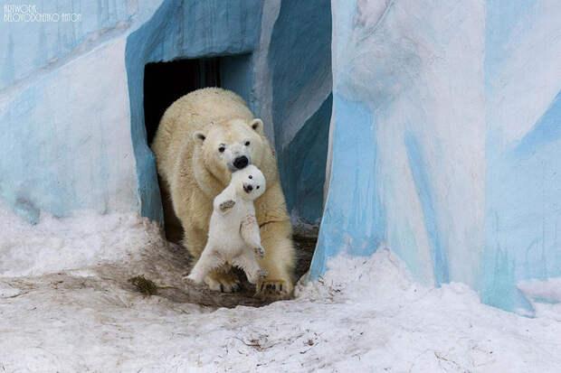 12 милых фото, которые показывают любовь между животными и их детенышами