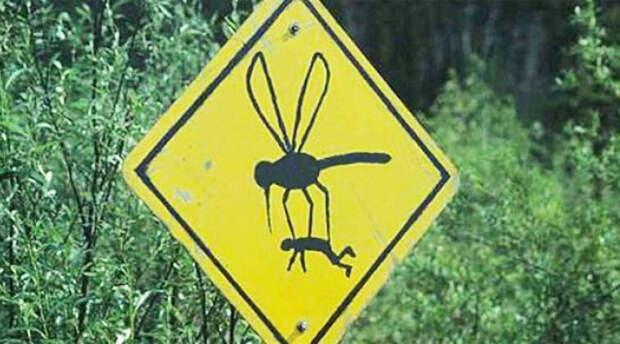 5 причин почему комары кусают одних, а других не беспокоят