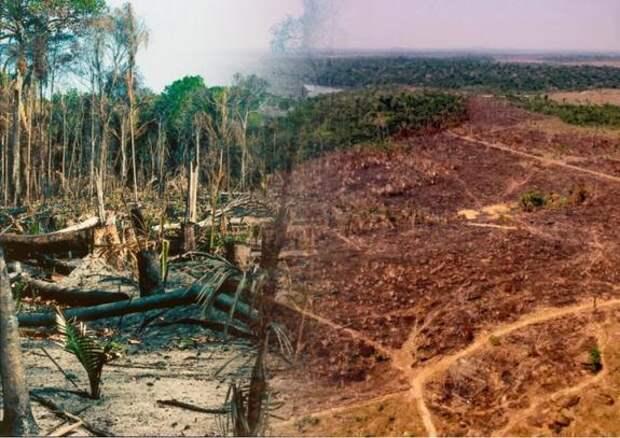 В бразильской Амазонии продолжают расти темпы вырубки лесов