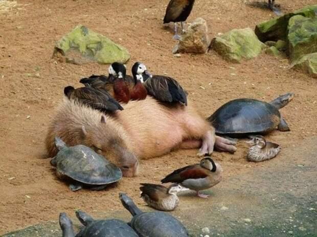 Спящие зверушки, отвида которых увас растает сердце