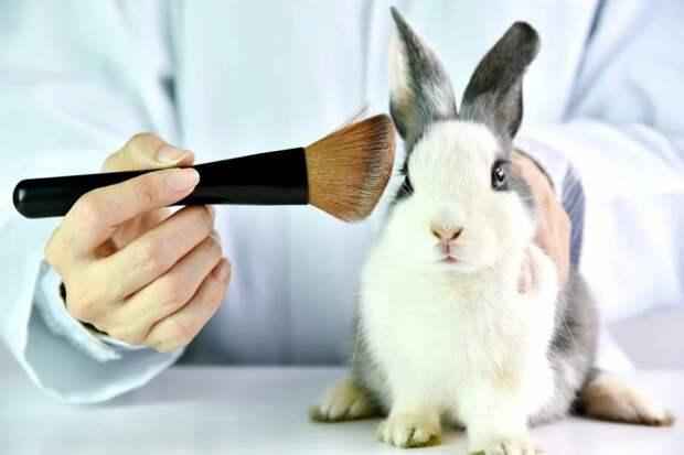 Тесты косметики на животных: 150 миллионов животных умирает в год во время тестов. Так ли они нужны в 21 веке?