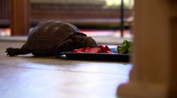 Трогательная дружба, которая продолжается уже 56 лет долгая дружба, долгая история, домашние питомцы, животные, мило, рядом по жизни, трогательно, черепахи