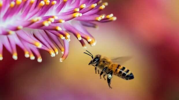 Немецкие ученые выявили роль сигнальных белков в эволюции насекомых