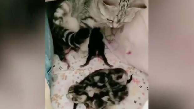 Кошка принесла котят под одеяло хозяйке и растрогала Сеть