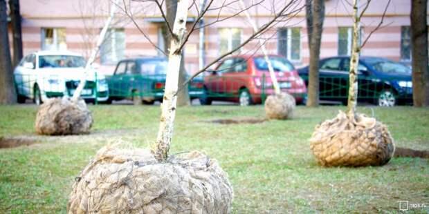 В Куркинском лесопарке появятся именные деревья