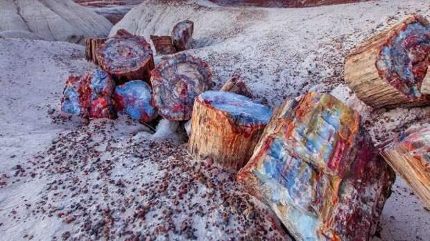 Кристаллы в древних бревнах (7 фото)