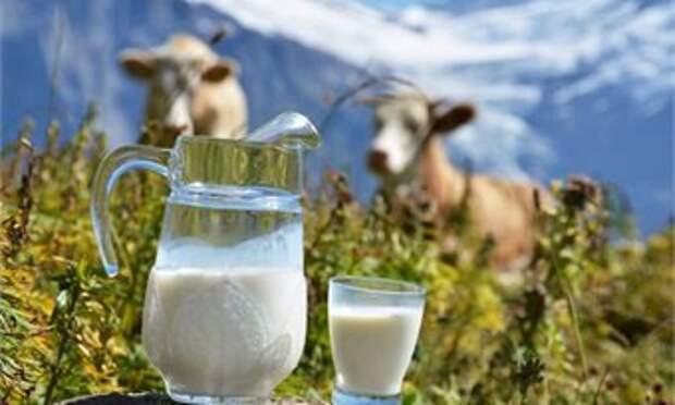 16 мая кировчанам советуют попить свежего молока, посадить капусту и не думать о плохом