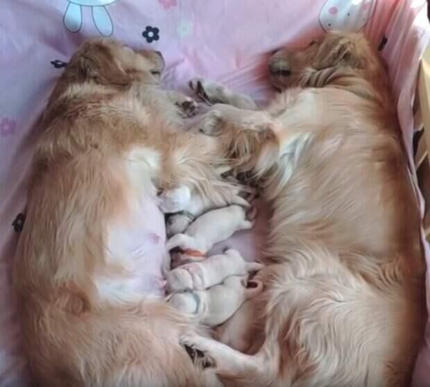 Собачье семейство с новорожденными щенками покорило сеть!