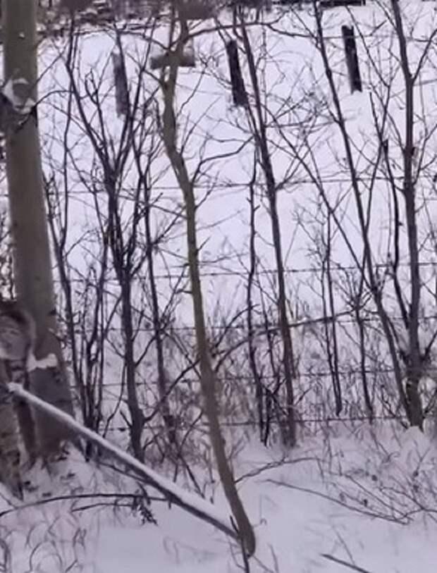 В мороз канадец вышел на прогулку и услышал жалобное мяуканье, которое раздавалось на ветке дерева