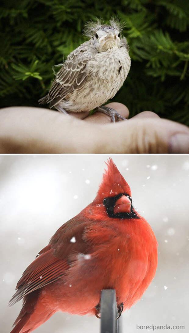 20 птиц, которые, взрослея, меняются до неузнаваемости