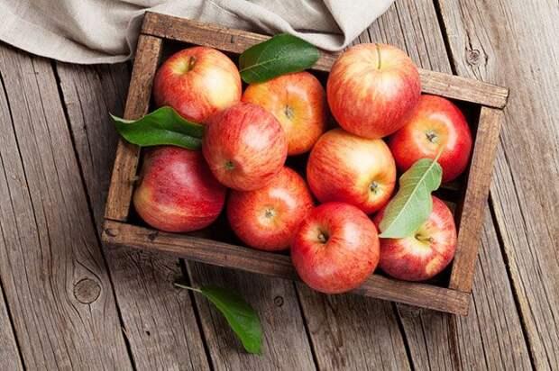 Яблоки – круглый год. Правила хранения плодов