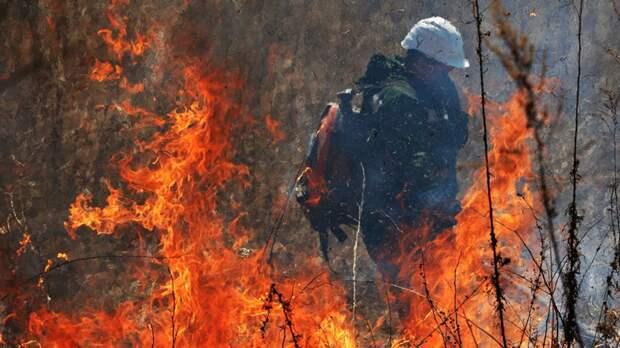 Кабмин выделил ещё более 2,7 млрд рублей на борьбу с лесными пожарами