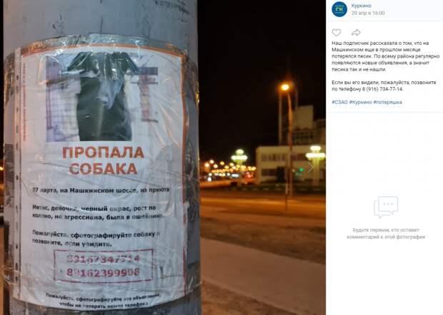 Из приюта на Машкинском шоссе сбежала собака