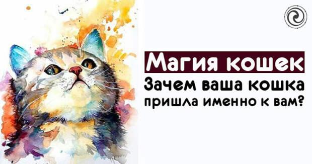 Магия кошек. Зачем ваша кошка пришла именно к вам?