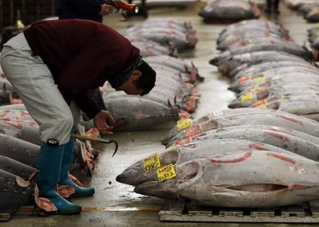 Удивительные и малоизвестные факты о суши, image #12