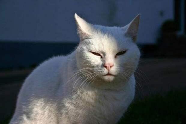 Подобранный кот животные, истории, коты
