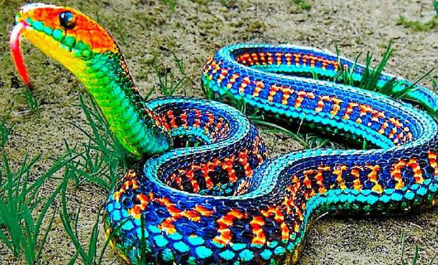 Самые редкие змеи в мире