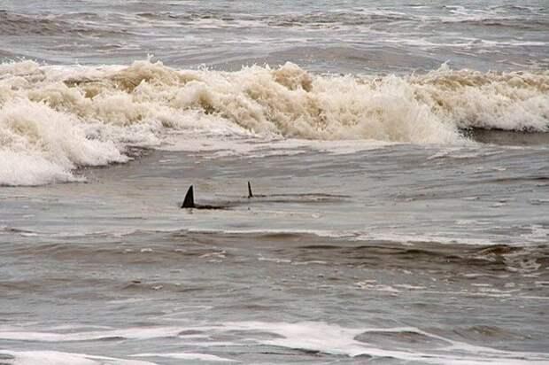 На глубине по колено акулы, факты, хищники