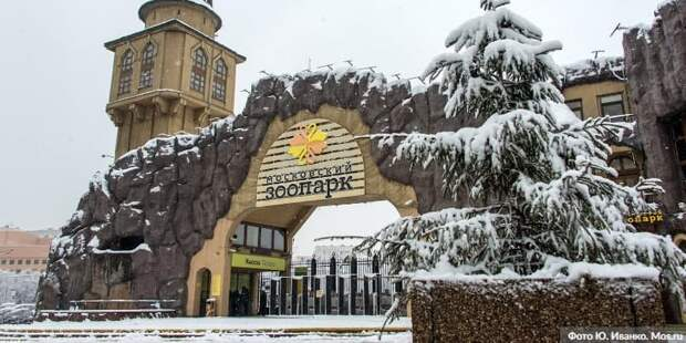 Ушел из жизни президент Московского зоопарка Владимир Спицин. Фото: Ю. Иванко mos.ru