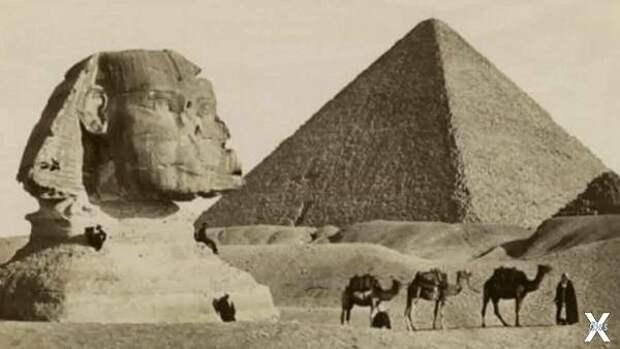 Египет и странная избирательность пес...