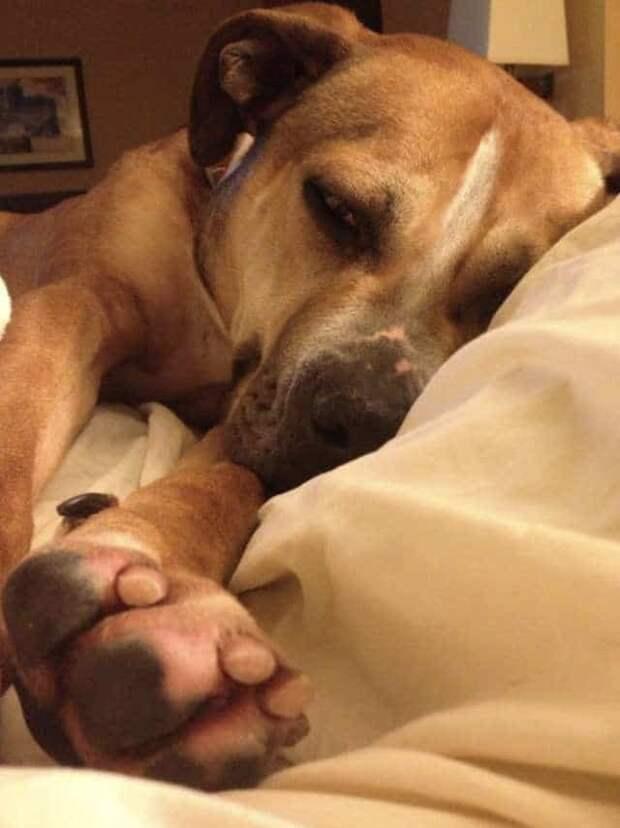 Пёс-здоровяк ласковый и милый, но вопреки всему живёт в приюте уже 9 долгих лет…