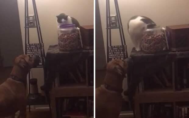 Командная работа: кот помог псу похитить вкусняшки