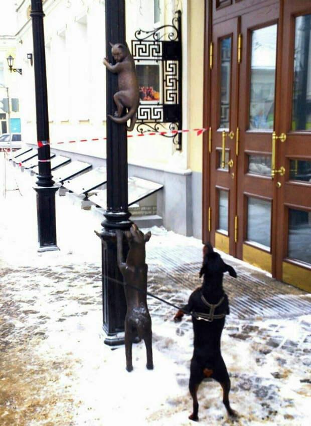 Novate.ru уверяет, собаки очень сообразительные. | Фото: Телеграф.