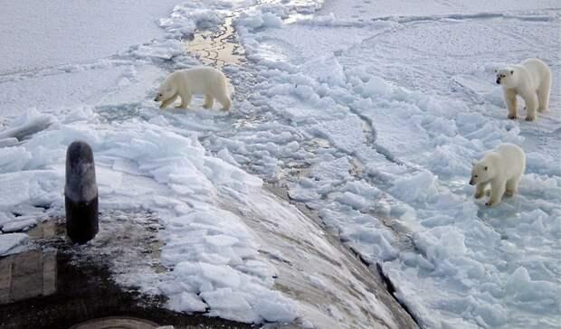 Вмузее Парка Горького откроется фотовыставка поитогам экспедиции «Хозяин Арктики»