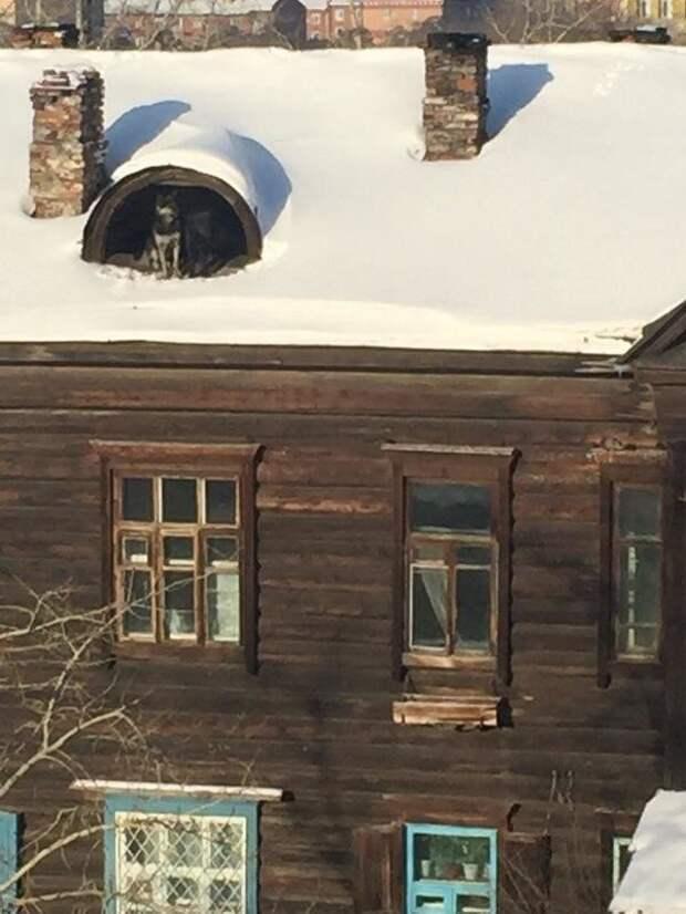 Бобик, который живёт на крыше